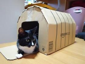 废纸箱做猫窝的方法 硬纸板狗窝手工制作