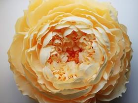 漂亮的纸花作品 手工皱纹纸花图片