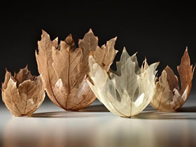 如何用树叶制作碗 漂亮手工树叶碗的图片