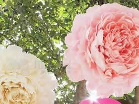 皱纹纸牡丹花的做法 皱纹纸手工制作牡丹花