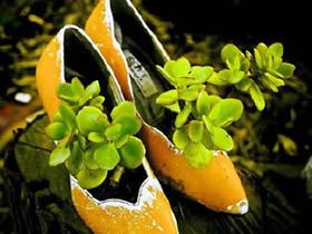 怎么做鞋子花盆图片 各种鞋子手工制作花盆