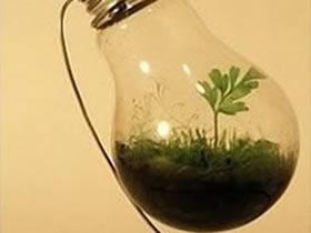 怎么做灯泡花盆的方法 灯泡废物利用制作盆栽