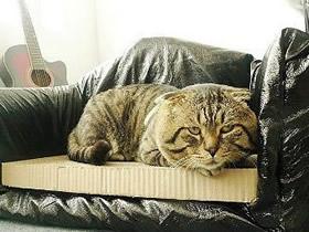 怎么做沙发猫窝图解 废纸箱手工制作漂亮猫窝