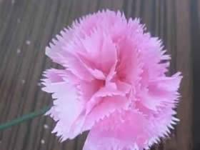 怎么做母亲节康乃馨花 手揉纸手工制作康乃馨