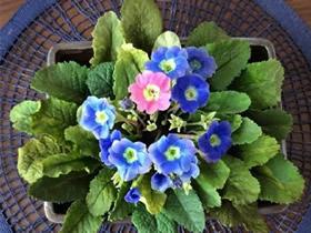 怎么做粘土小花的方法 超轻粘土制作花朵图解