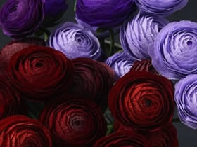 怎么做超美皱纹纸玫瑰 皱纹纸制作精美玫瑰花