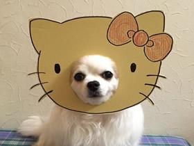 怎么做狗狗的恶搞道具 硬纸板制作整狗面具