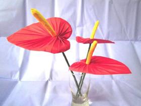 怎么折纸花烛红掌花的详细折法步骤图解
