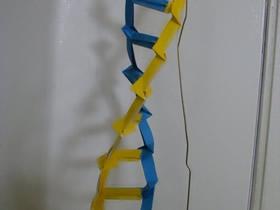 DNA的折纸方法图解