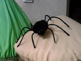 简单自制万圣节蜘蛛的方法