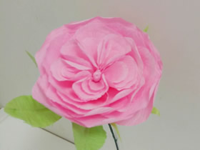 用皱纹纸做奥斯汀玫瑰的方法图解