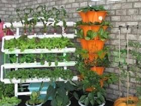 用PVC管在阳台种蔬菜的方法
