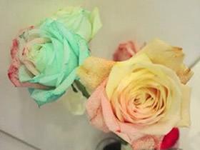 怎么利用虹吸作用做彩虹玫瑰花的方法