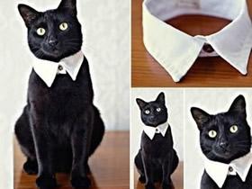 怎么改造旧衬衫做猫咪领子的方法图解