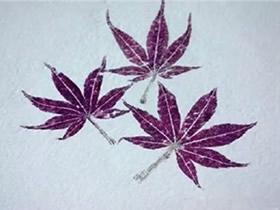 怎么用拓印画做植物图鉴的方法图鉴