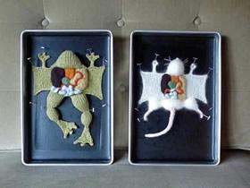 怎么用针织做动物解剖场景的作品图片